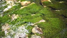 Verse rivierstroom stock video