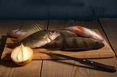 Verse riviervissen Stock Fotografie