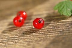 Verse rode aalbes Stock Afbeelding