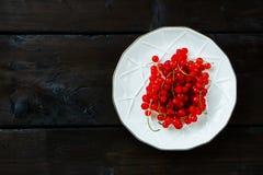 Verse rode aalbes Royalty-vrije Stock Afbeeldingen