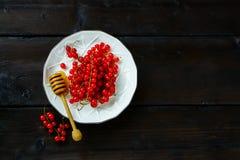 Verse rode aalbes Stock Foto's