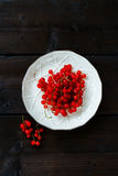 Verse rode aalbes Stock Foto