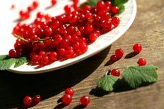 Verse rode aalbes in kom Royalty-vrije Stock Afbeelding
