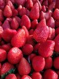 Verse rode aardbeien Royalty-vrije Stock Afbeelding