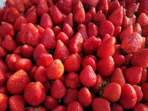 Verse rode aardbeien Stock Fotografie