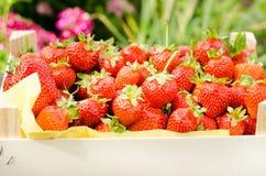 Verse rode aardbeien Royalty-vrije Stock Foto