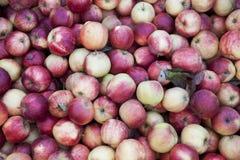 Verse rode appelen op de markt Vele appelen een grote achtergrond voor een fruitopslag Stock Afbeeldingen