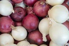 Verse rode en witte uien bij de landbouwersmarkt Stock Foto's