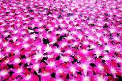Verse rode roze orchideebloemen op watervijver Stock Foto