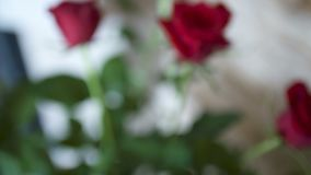 Verse rode rozen stock video