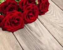 Verse rode rozen Stock Foto's