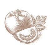 Verse rode tomaat met greens Royalty-vrije Stock Afbeelding
