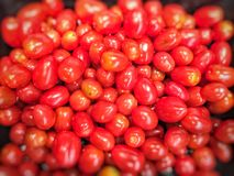 Verse rode tomaten Stock Fotografie