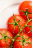 Verse rode tomaten die op wit worden geïsoleerdi   Royalty-vrije Stock Afbeeldingen