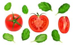 Verse rode tomaten en basilicumbladeren Stock Afbeelding