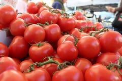 Verse, rode wijnstok rijpe tomaten Stock Fotografie
