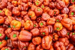 Verse rode zoete groene paprika's op vertoning bij de markt Royalty-vrije Stock Foto's