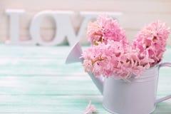 Verse roze hyacintenbloemen in gieter en woordliefde Stock Foto's