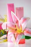 Verse roze lelie en room Royalty-vrije Stock Afbeeldingen