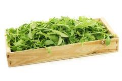 Verse rucolabladeren Eruca sativa in een houten doos Stock Fotografie