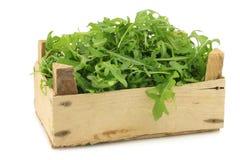 Verse rucolabladeren (sativa Eruca) royalty-vrije stock fotografie