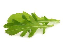 Verse rucolabladeren (sativa Eruca) stock afbeelding