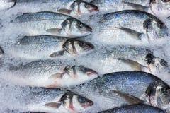 Verse Russische vissen op ijs bij voedingsmiddelenmarkt 2 Royalty-vrije Stock Foto