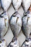 Verse Russische vissen op ijs bij voedingsmiddelenmarkt 3 Royalty-vrije Stock Afbeeldingen