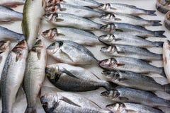 Verse Russische vissen op ijs bij voedingsmiddelenmarkt 4 Stock Afbeeldingen