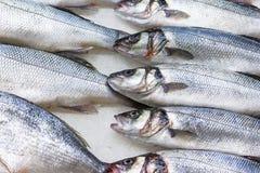 Verse Russische vissen op ijs bij voedingsmiddelenmarkt 5 Stock Foto