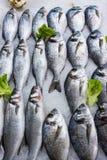 Verse Russische vissen op ijs bij voedingsmiddelenmarkt 6 Royalty-vrije Stock Fotografie