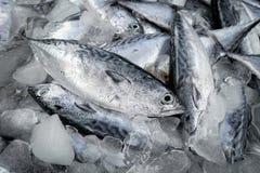 Verse ruw van vissen in de markt Royalty-vrije Stock Afbeeldingen