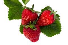 Verse ruwe aardbeien Stock Fotografie