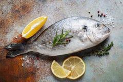 Verse ruwe Dorado-vissen met kruiden en olijfolie op een blauwe roestige lijst Hoogste mening Vlak leg royalty-vrije stock afbeeldingen