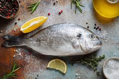 Verse ruwe Dorado-vissen met kruiden en olijfolie op een blauwe roestige lijst Hoogste mening Vlak leg stock afbeeldingen