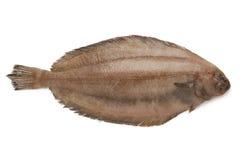 Verse ruwe megrim vissen royalty-vrije stock foto's