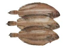 Verse ruwe megrim vissen royalty-vrije stock foto