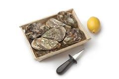 Verse ruwe oesters in een doos Royalty-vrije Stock Foto's