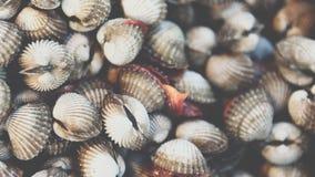 Verse ruwe overzeese kokkelstweekleppige schelpdieren bij zeevruchtenmarkt Stock Foto's