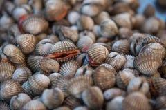 Verse ruwe overzeese kokkelstweekleppige schelpdieren bij zeevruchtenmarkt Stock Foto