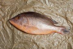 Verse ruwe rode snapper vissen op hoofdkaas steunend document, het koken conce royalty-vrije stock fotografie