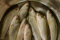 Verse ruwe vissen royalty-vrije stock afbeelding