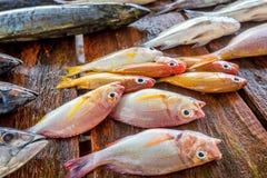 Verse ruwe vissen bij markt Stock Afbeelding
