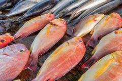 Verse ruwe vissen bij markt Royalty-vrije Stock Foto