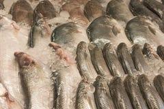 Verse ruwe vissen met ijs in zeevruchtenmarkt in tropisch land, B Royalty-vrije Stock Afbeeldingen