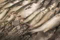 Verse ruwe vissen met ijs in zeevruchtenmarkt in tropisch land, B Royalty-vrije Stock Foto's