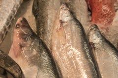 Verse ruwe vissen met ijs in zeevruchtenmarkt in tropisch land, B Royalty-vrije Stock Foto
