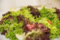 Verse salade Stock Foto