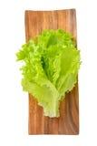 Verse salade Stock Afbeelding