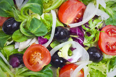 Verse saladeachtergrond Stock Fotografie
